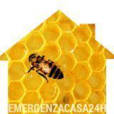 spostamento alveare disinfestazione api apicoltore