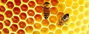 disinfestazione api alveari
