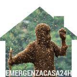 pronto intervento disinffestazione api pericolo attacco persone