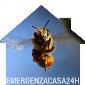 emergenza disinfestazione api